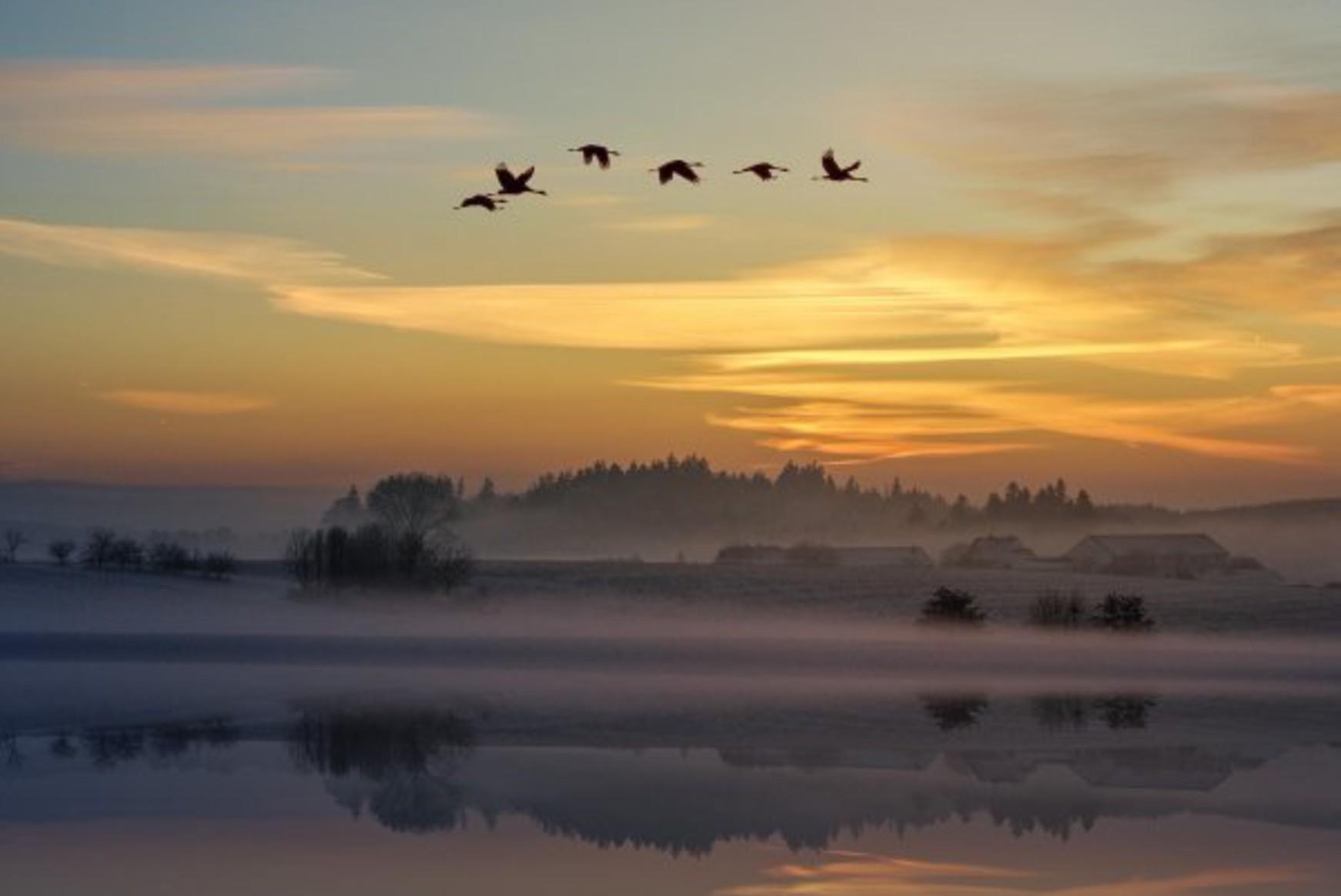 Six oiseaux migrateurs volant au dessus d'un paysage enneigé sur un fond de soleil couchant